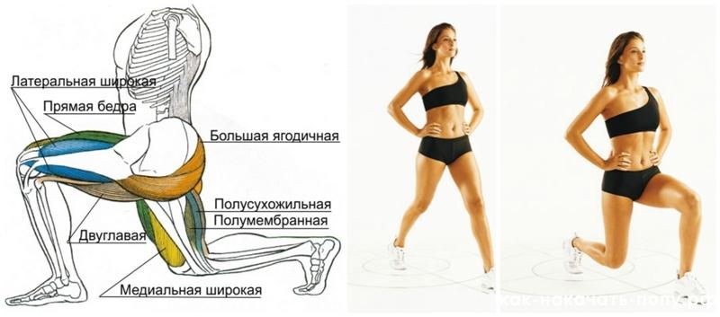 Активные мышцы
