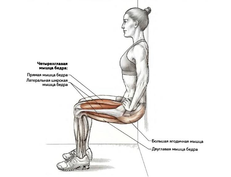Мышцы, которые задействует упражнение