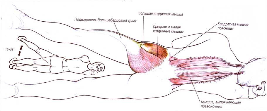 Активные мышцы при выполнении подъёмов