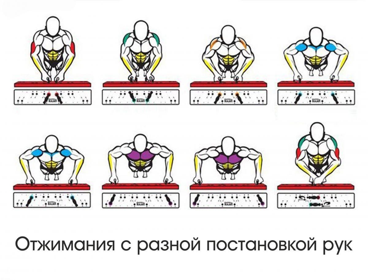 Мышцы, работающие при отжимании на кулаках