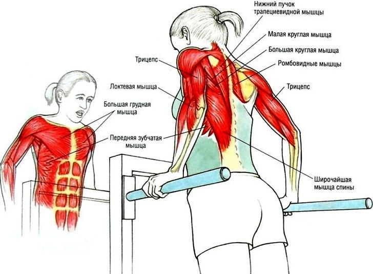 Целевые мышцы упражнения