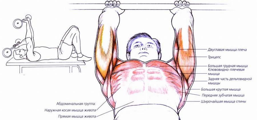 Активные мышцы при французском жиме