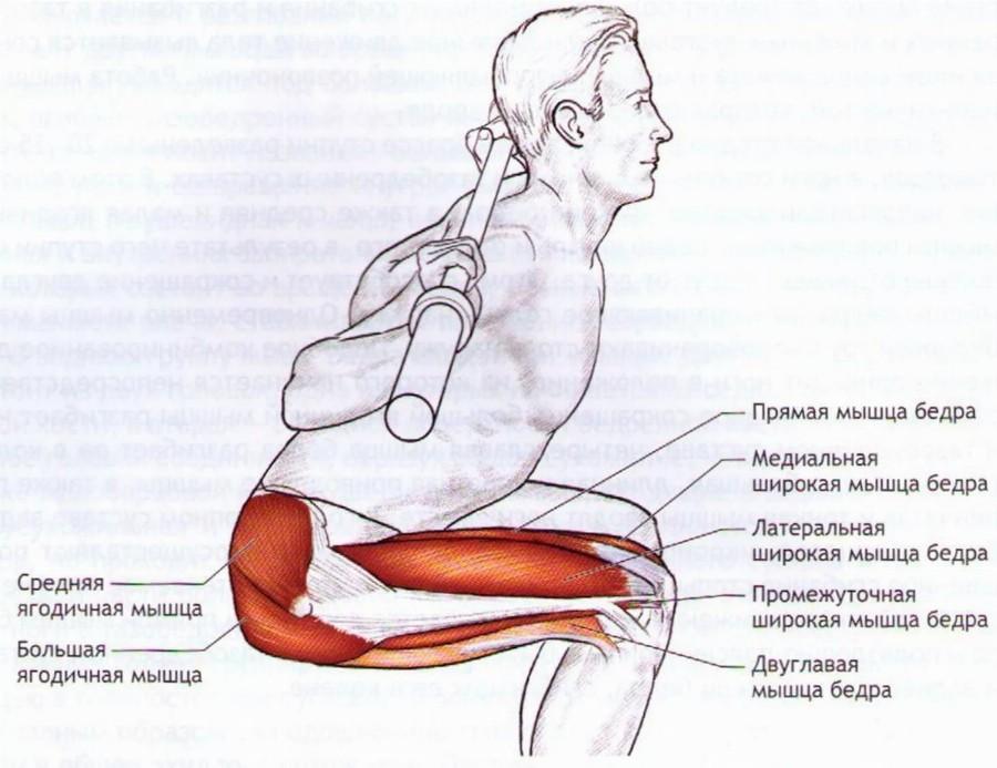 Анатомия приседания.