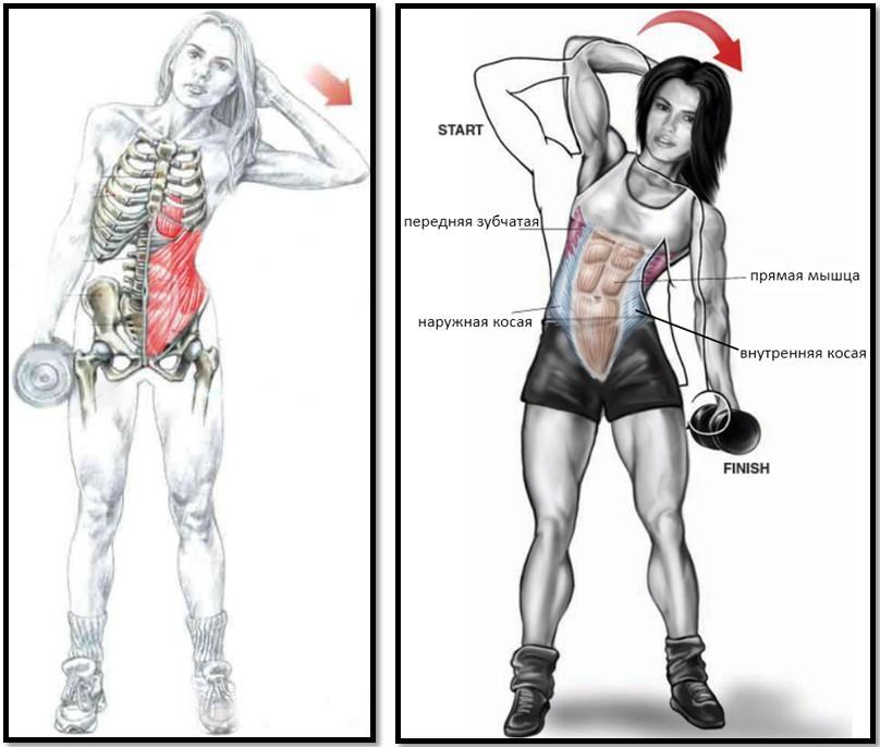 Какие мышцы включаются в работу
