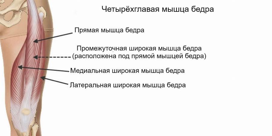 Крадрицепс