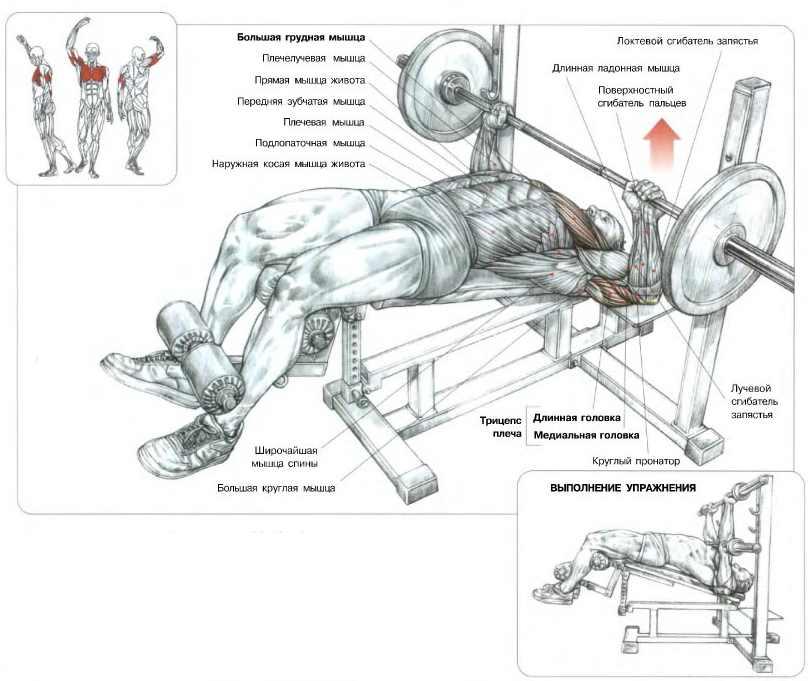 Мышцы, задействованные при жиме лёжна на наклонной скамье (голова вниз)