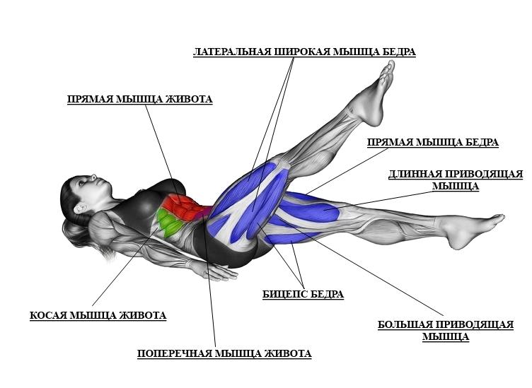 Мышцы живота и бедёр