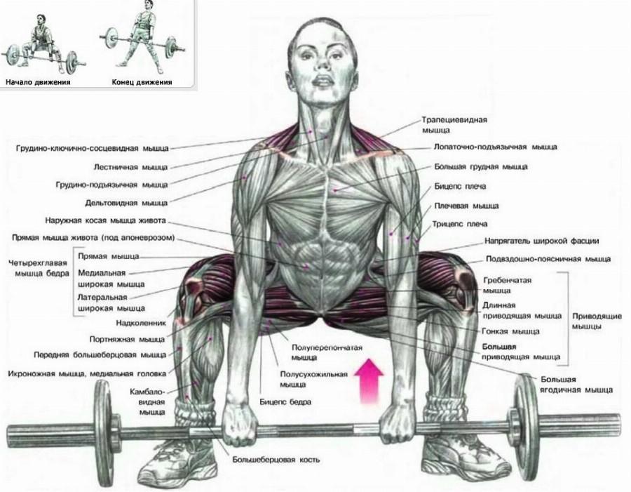 Тяга Сумо: активные мышцы
