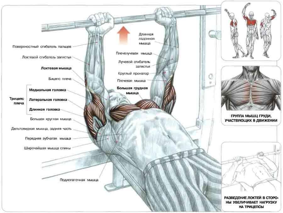 Задействованные мышцы во время жима лёжа