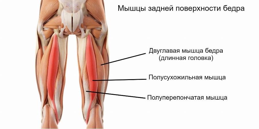 Упражнения для набора мышечной массы ног и ягодиц thumbnail