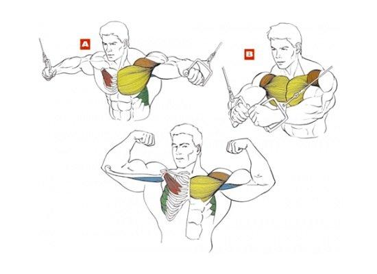 Мышечный атлас упражнения